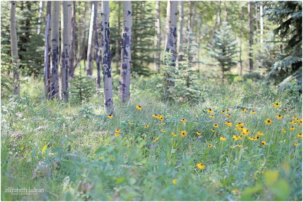 Colorado-Conifer+Evergreen-ElizabethLadeanPhotography--_6061.jpg