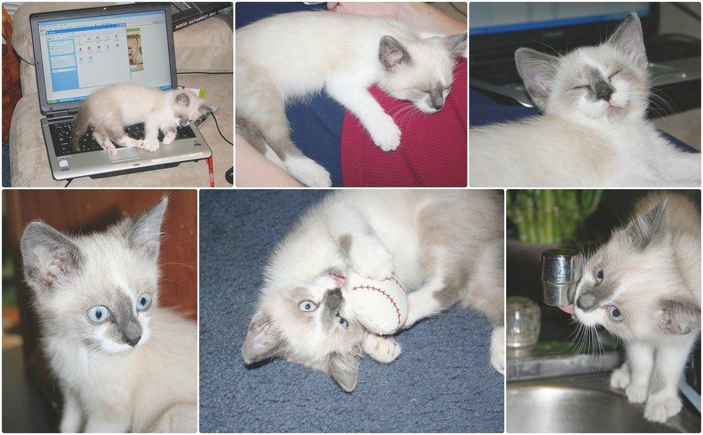Noah-Cat-Lover-ELP-photo_6399.jpg