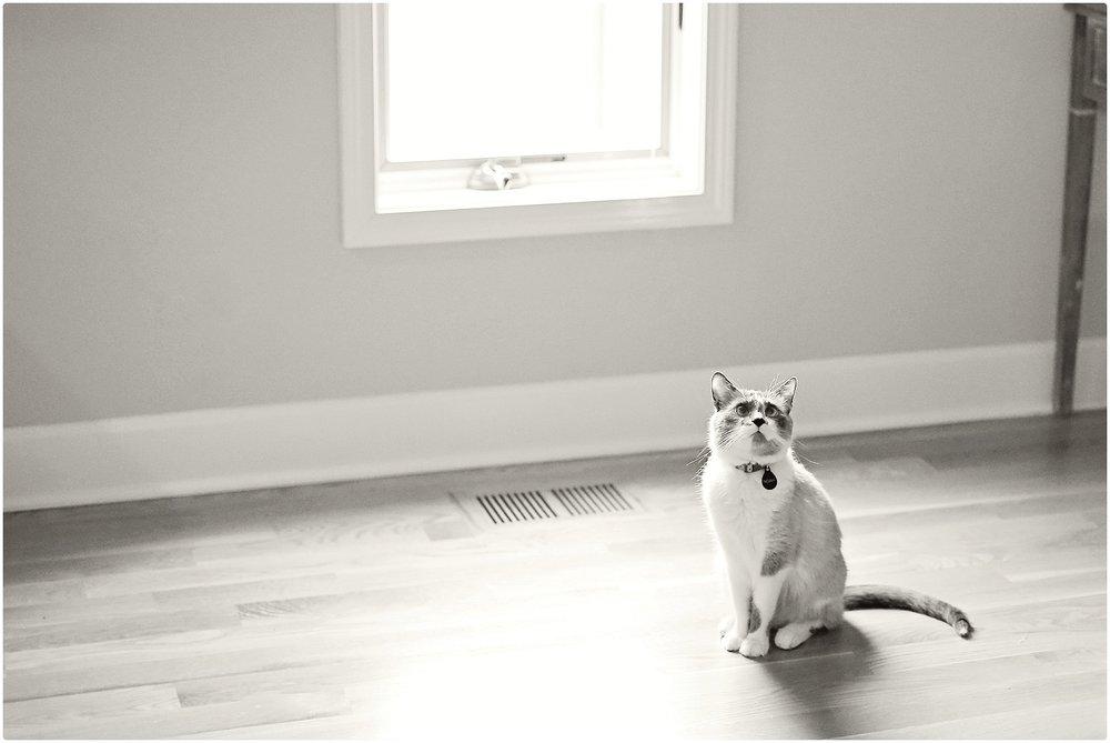 Noah-Cat-Lover-ELP-photo_6409.jpg