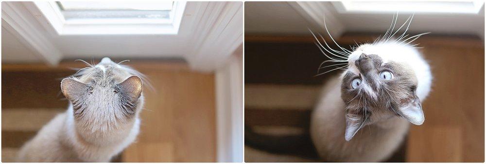 Noah-Cat-Lover-ELP-photo_6405.jpg