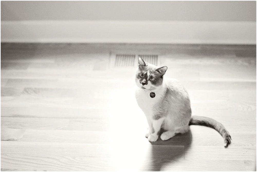 Noah-Cat-Lover-ELP-photo_6410.jpg