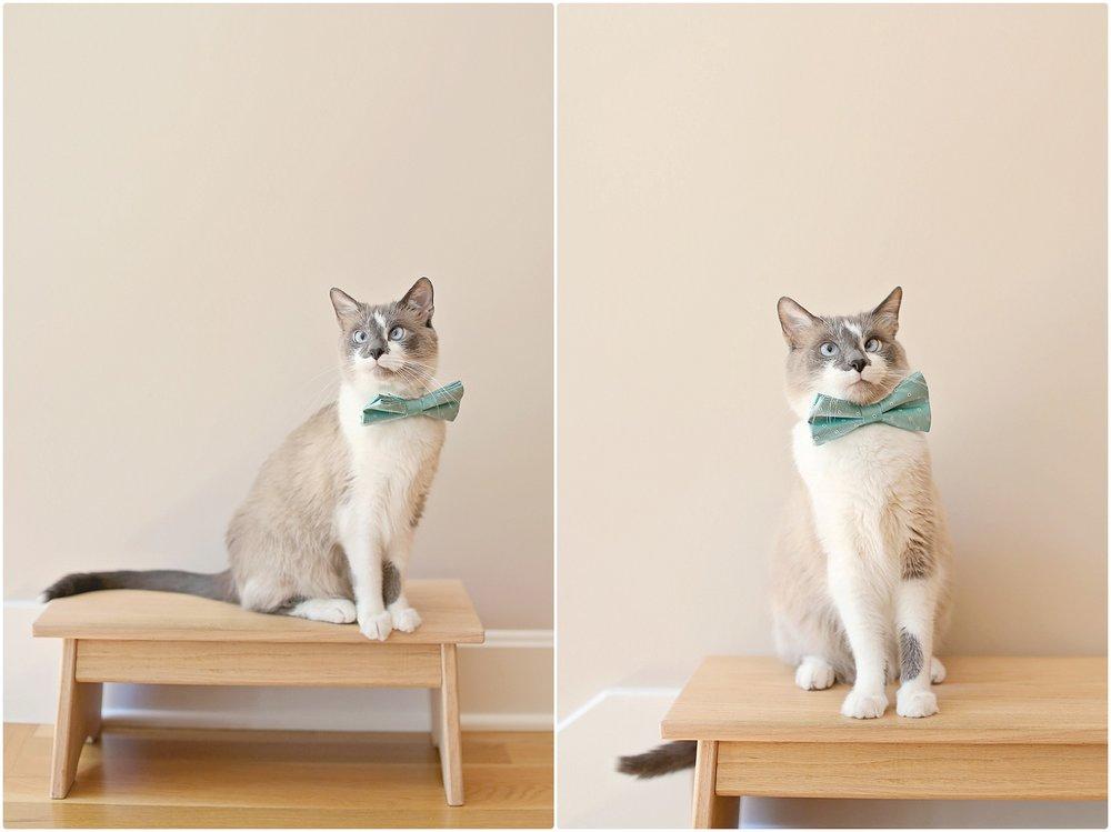 Cat-Birthday-10-year-old-cat-Elizabeth-Ladean-Photography-photo_6743.jpg