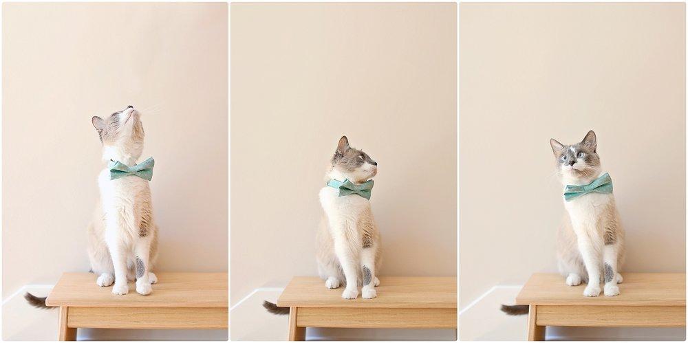 Cat-Birthday-10-year-old-cat-Elizabeth-Ladean-Photography-photo_6744.jpg