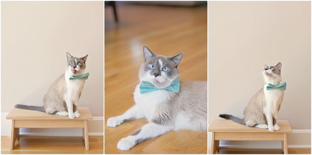 Cat-Birthday-10-year-old-cat-Elizabeth-Ladean-Photography-photo_6745.jpg