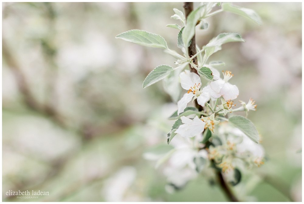 Apple-Blossoms-Springtime-Wedding-Inspiration-Weston-Red-Barn-2018-elizabeth-ladean-photography-photo-_7162.jpg