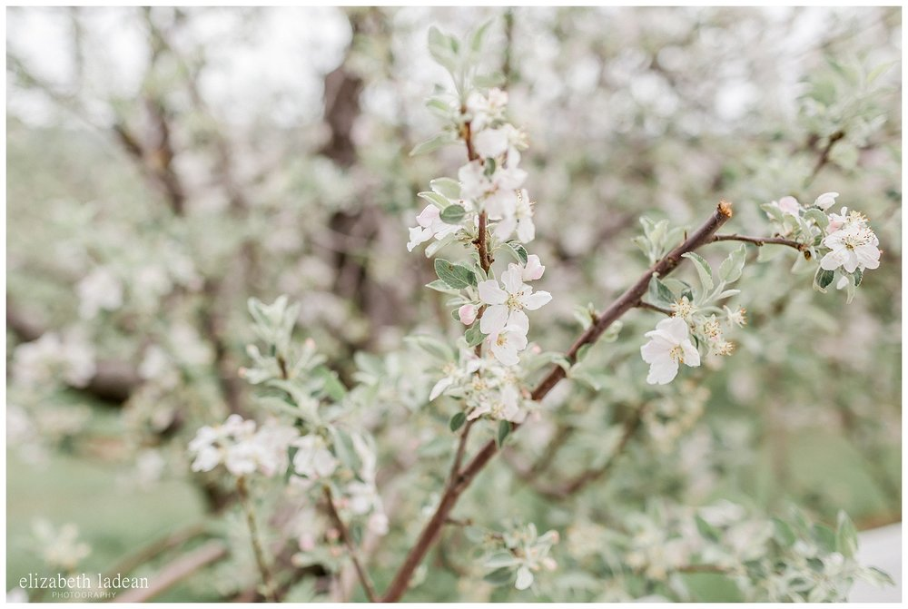 Apple-Blossoms-Springtime-Wedding-Inspiration-Weston-Red-Barn-2018-elizabeth-ladean-photography-photo-_7172.jpg