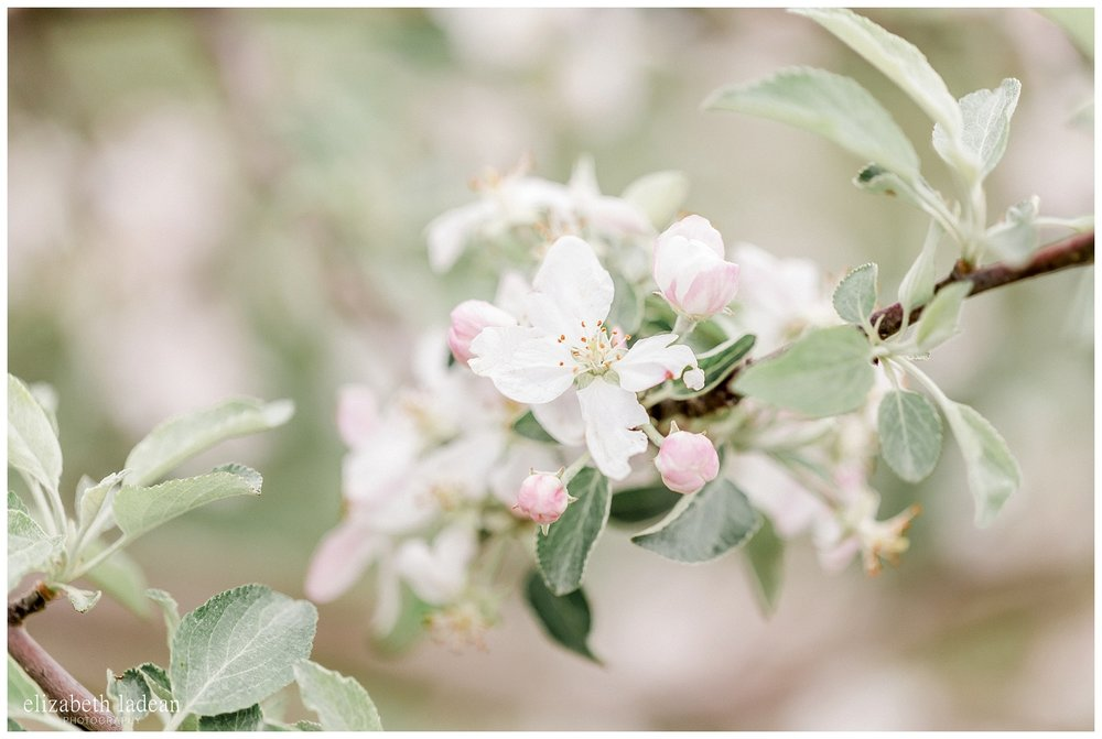 Apple-Blossoms-Springtime-Wedding-Inspiration-Weston-Red-Barn-2018-elizabeth-ladean-photography-photo-_7180.jpg