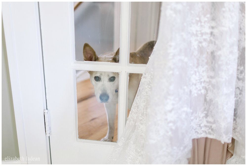 incorporating your dog in your wedding day photography