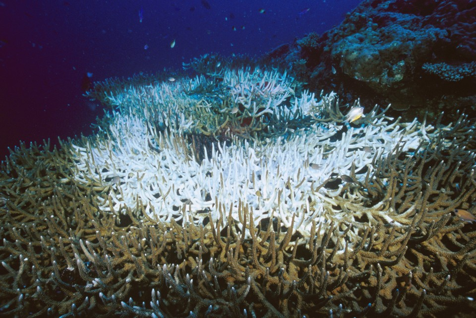 The Quest to Save Coral Reefs