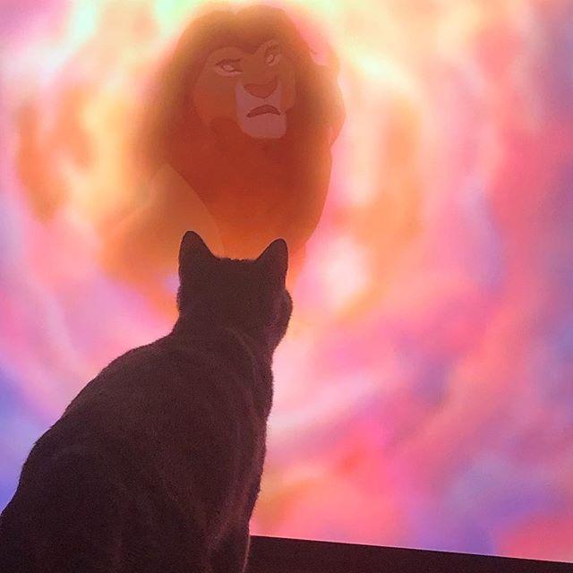 Når der er Løvernes konge på fjerneren🦁😻 #mokkamis