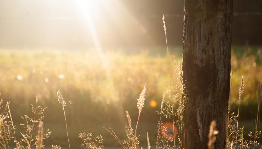 field-pole-sun-jpg
