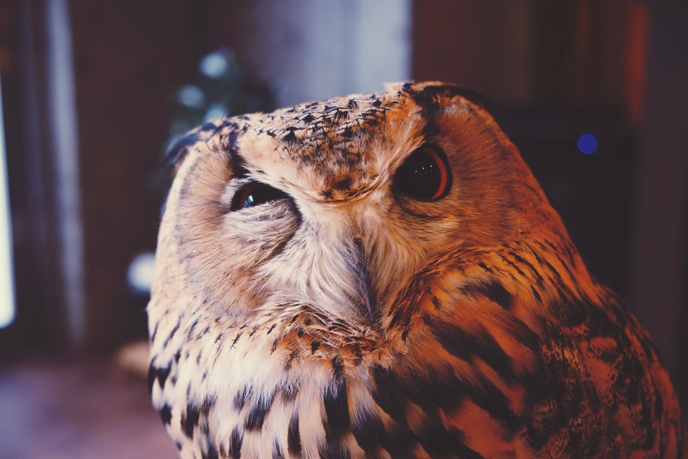 skeptical-owl-joe-green-539333.jpg