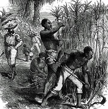 plantation1a_360.jpg