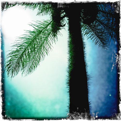 IZZE_7702_palm.jpg