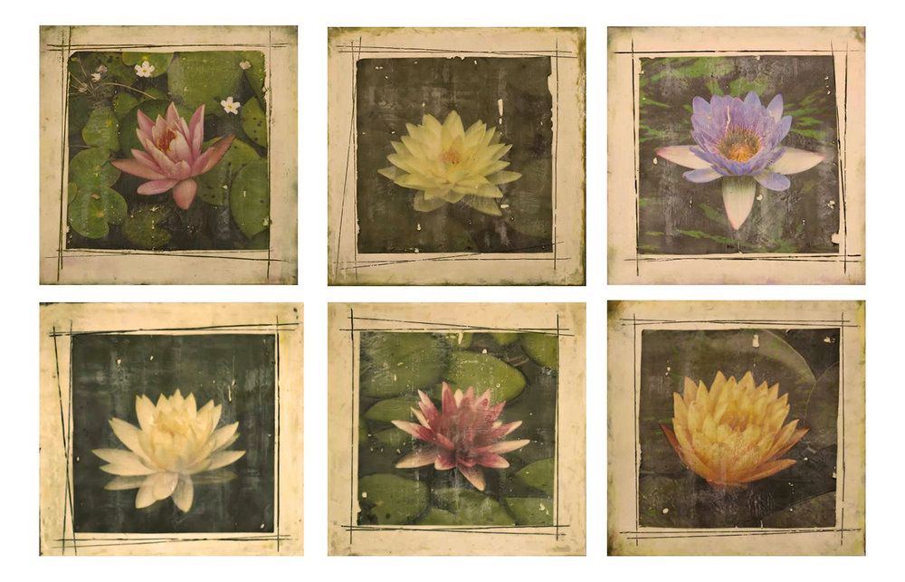 Kindley-Waterlilies-20x20-$385ea (2).jpg