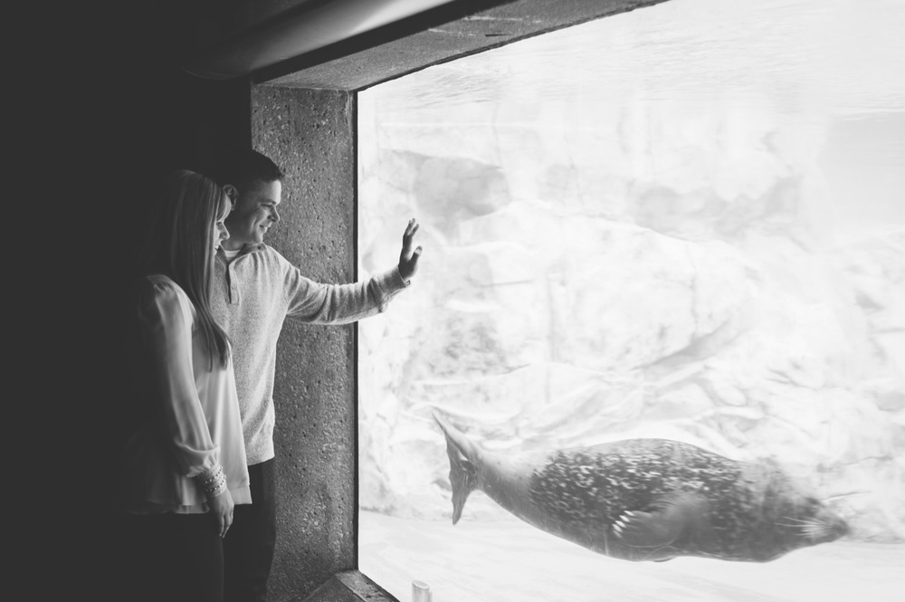20131103125923_Chicago_engagement_Photography_lincoln_park_zoo.jpg