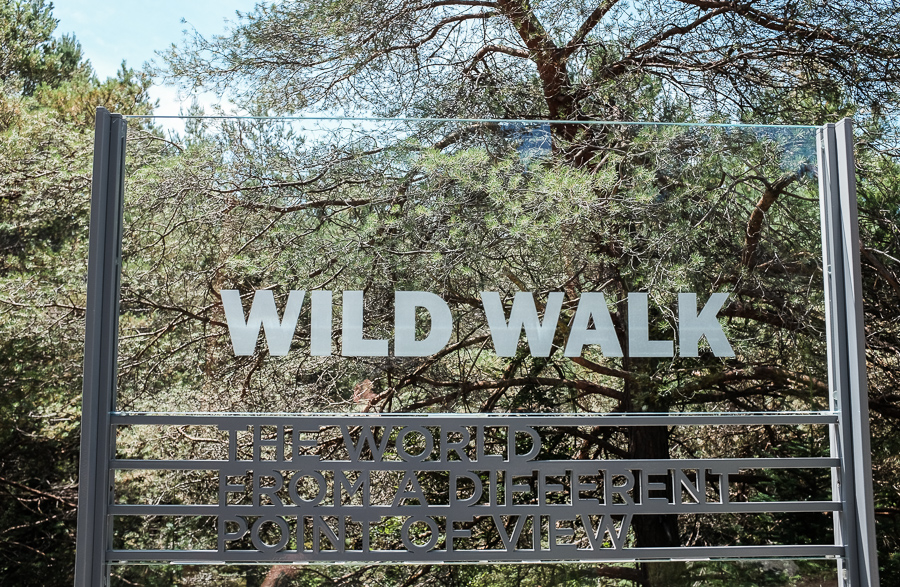 the wild center-6.jpg