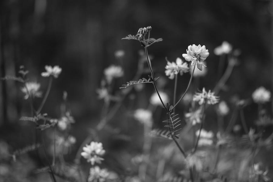 black and white daze in maine blog-2.jpg