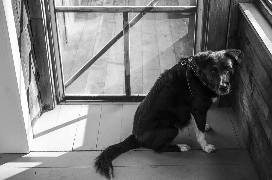 black and white daze in maine blog-1.jpg