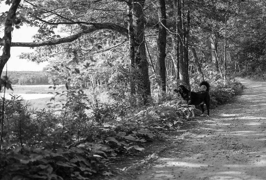 black and white daze in maine blog-5.jpg
