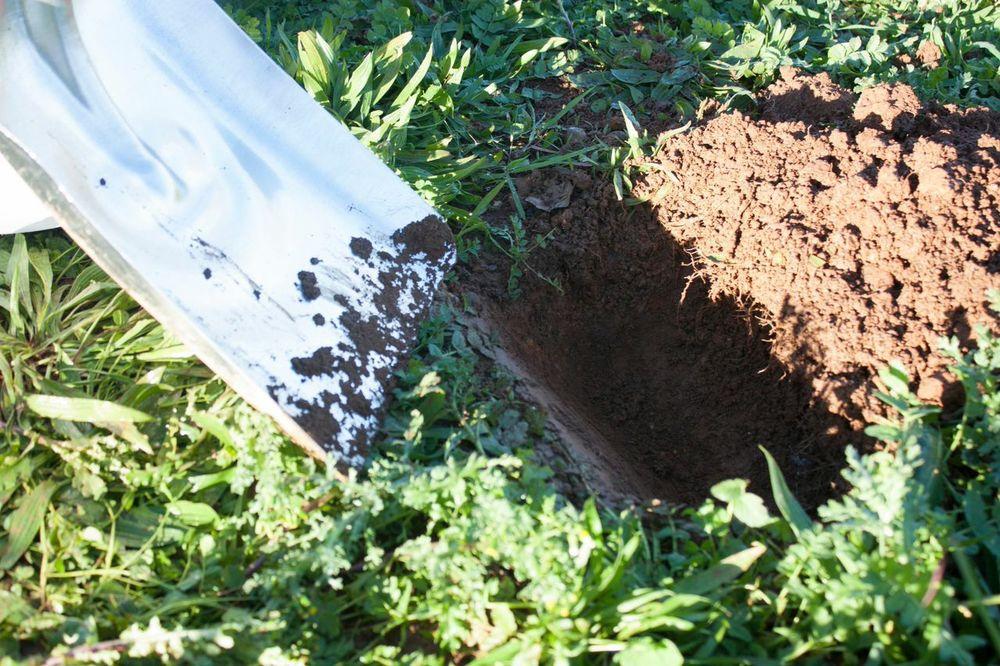 first-soil-sample.jpeg