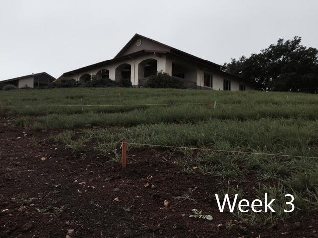 week-3-1.jpg