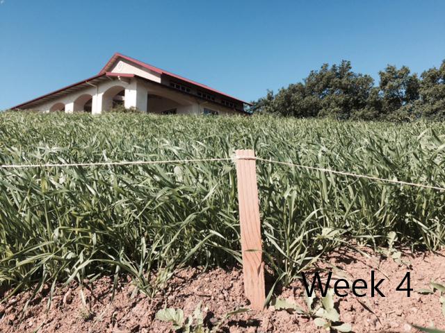 week-4.jpg