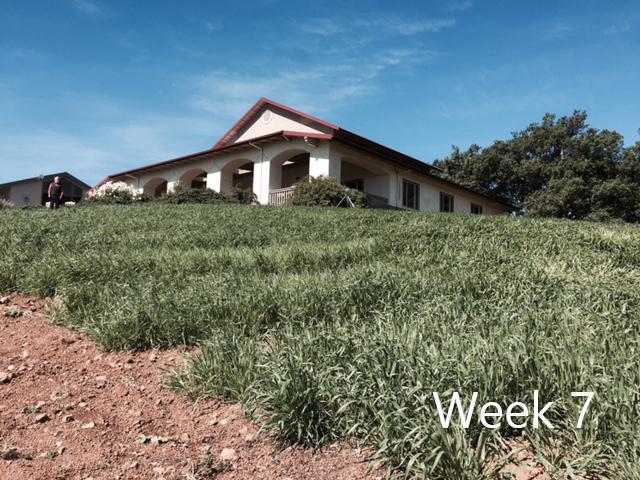 week-7-1.jpg