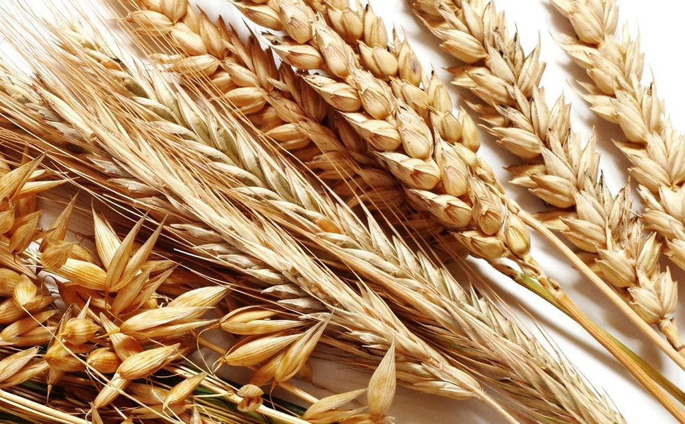original-wheat-smaller.jpg