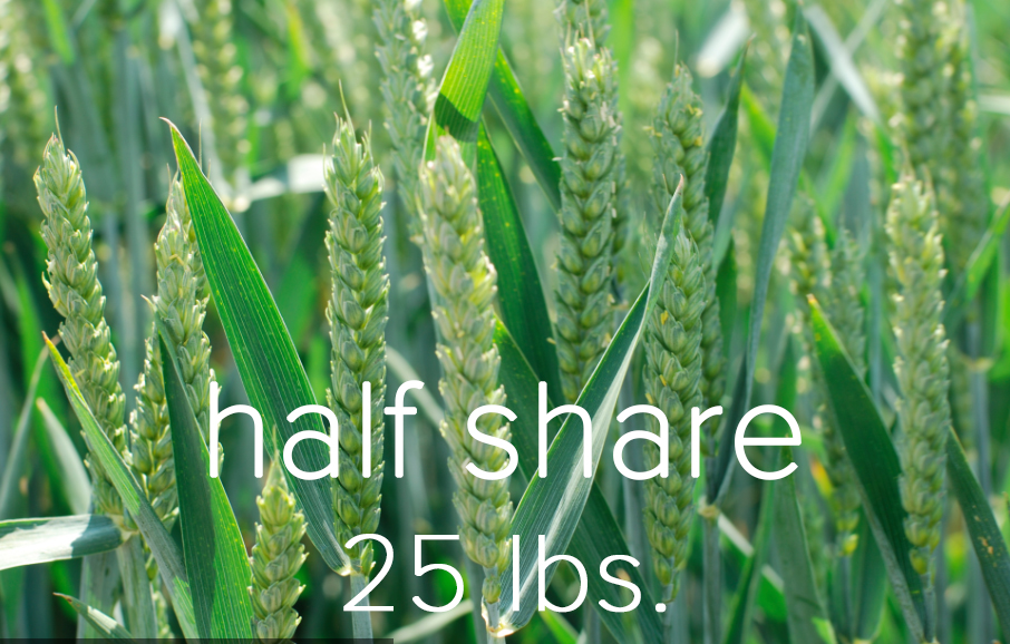 Half Share.jpg