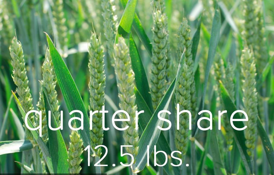 Quarter Share.jpg