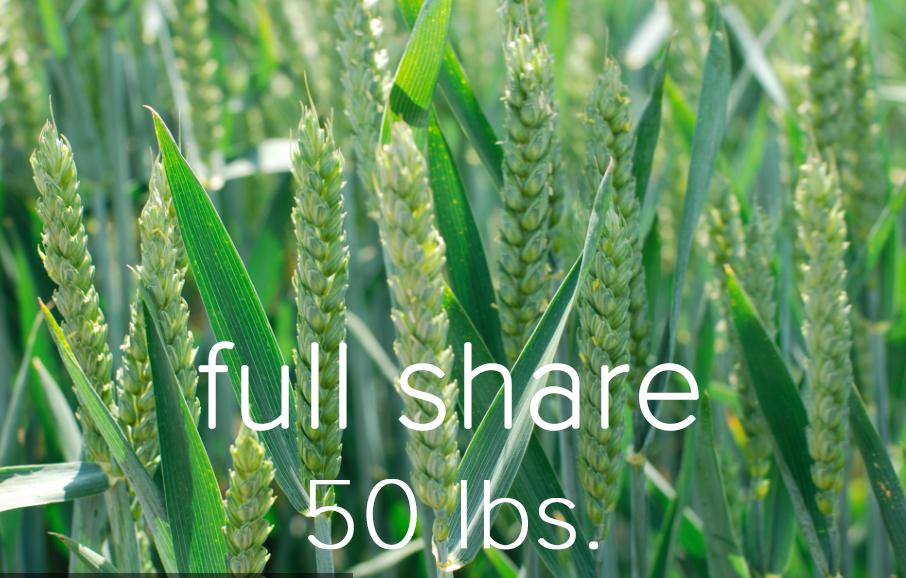 Full share.jpg