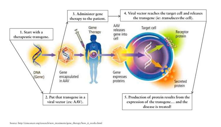 gene therapy and how it works In the medicine field, gene therapy (also called human gene transfer) is the therapeutic delivery of nucleic acid into a patient's cells as a drug to treat disease the first attempt at modifying human dna was performed in 1980 by martin cline,  in 2002 this work led to the publication of the first successful gene therapy treatment for adenosine deaminase deficiency (ada-scid.