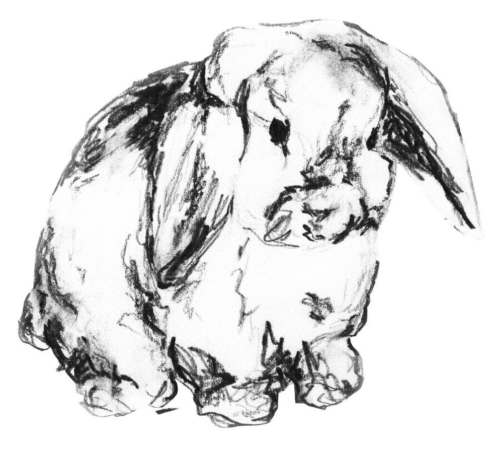bunny2.jpeg