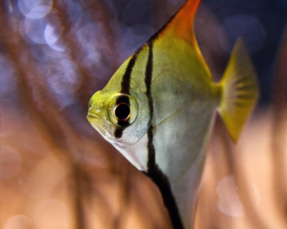 20110125_AOPfish_1228.jpg