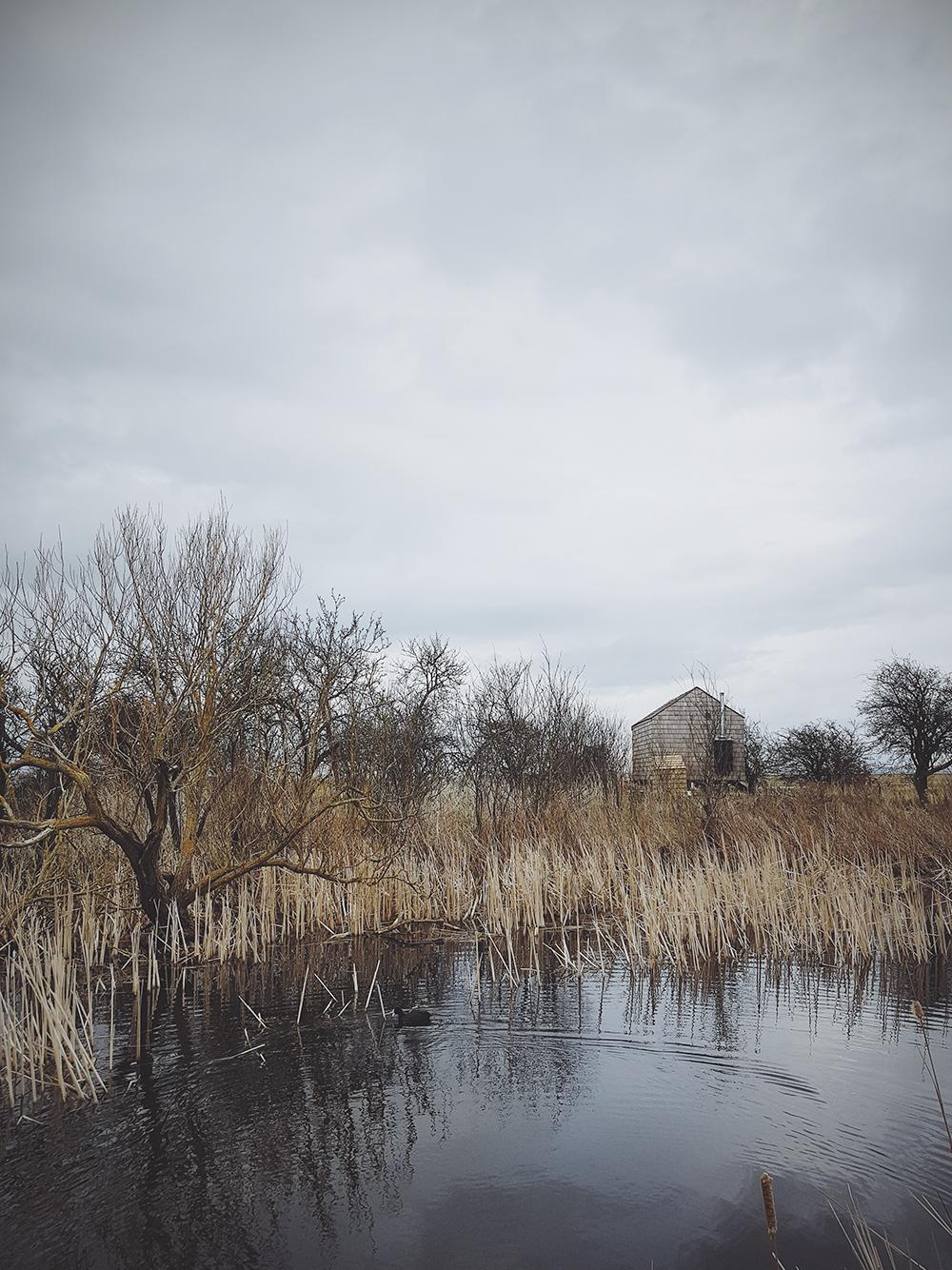 alidover_elmley_nature_reserve_17.jpg