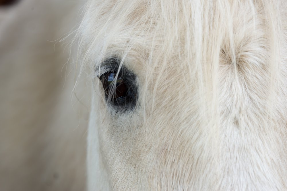 Equus Coaching - You + a horse = pure magic!