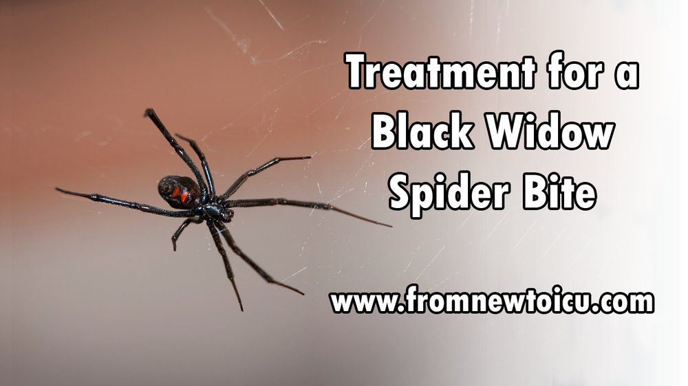 black widow bite treatment