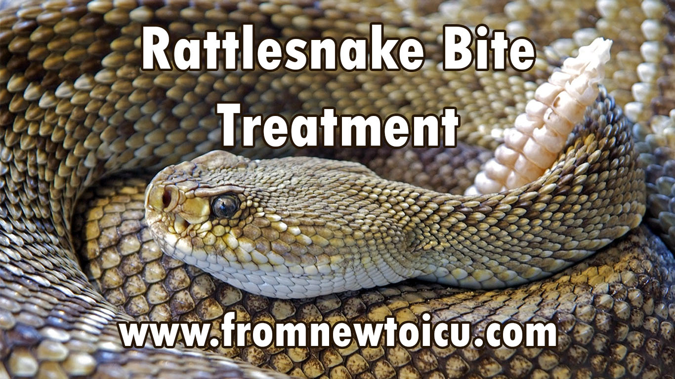 Rattlesnake Bite Treatment — From New to ICU