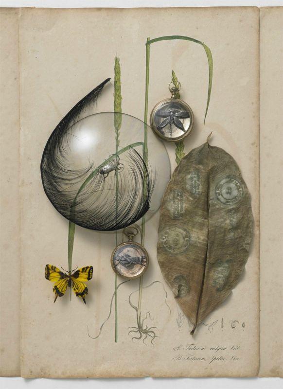 Photos d'Anita Calero pour le livre Jewelry de Federico de Vera