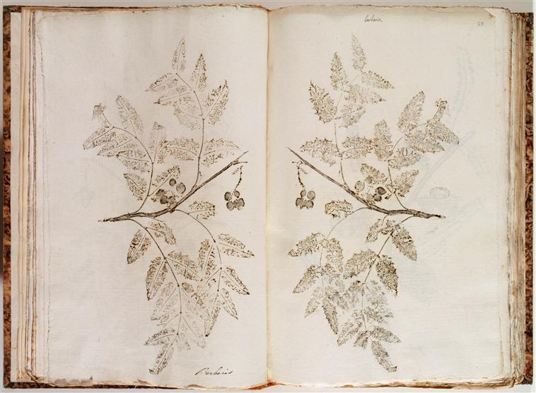 Impressions naturelles des plantes du voyage de MM. Humboldt et Bonpland. Ms 988. Bibliothèque de l'Institut.