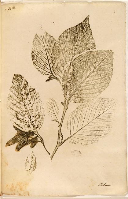 Impressions naturelles des plantes du voyage de MM. Humboldt et Bonpland . Ms 988. Bibliothèque de l'Institut.