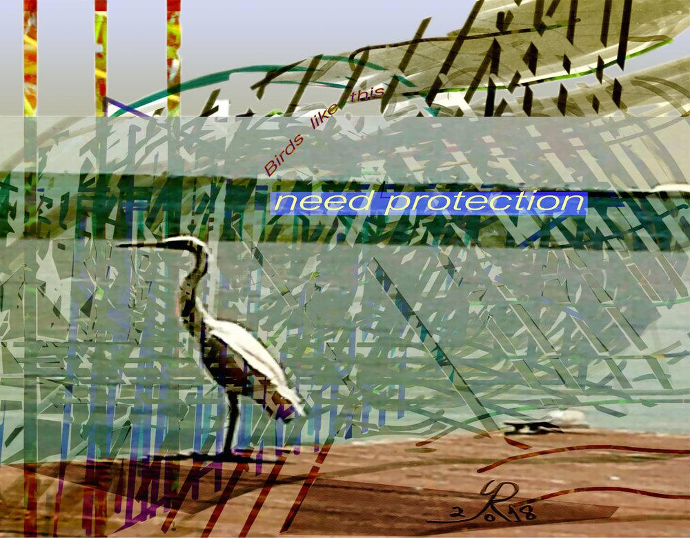 Birds Need Protection  (Los pájaros necesitan protección) Pigment Print, 39 x 50 cm  Una llamada a la protección de la flora y fauna.