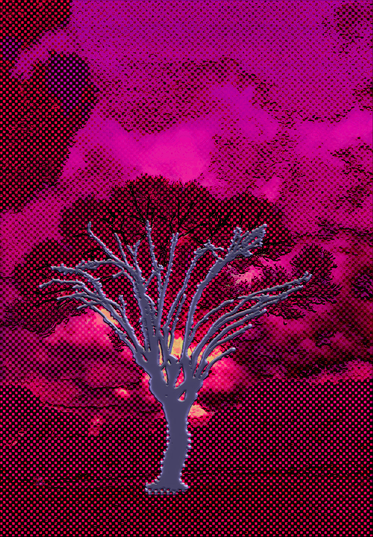 Plastic Tree  (Árbol de plástico) Digital C-Print, 108 x 75 cm