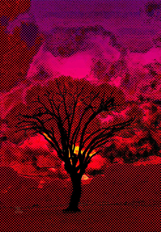 Scorched Tree  (Árbol chamuscado) Digital C-Print, 108 x 75 cm