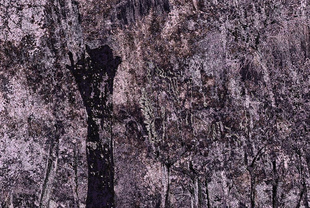 Bosque quemado  Pigment print, 47 x 70 cm  bosque quemado. restos de vegetación carbonizadas. lo verde sólo un recuerdo. bosque quemado.