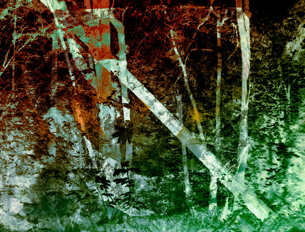 "Sherwood Forest ""Fallen Tree""   Digital C-Print, 76 x 100 cm"