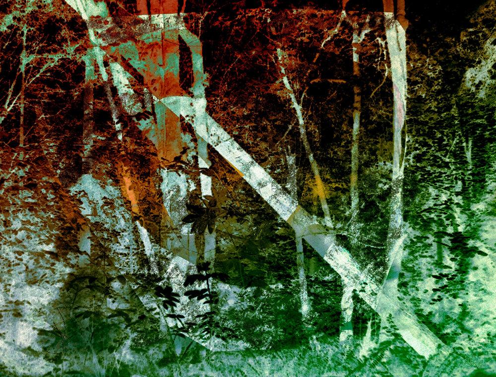 "Sherwood Forest ""Fallen Tree""  (El bosque de Sherwood ""Árbol caído"") Digital C-Print, 76 x 100 cm"