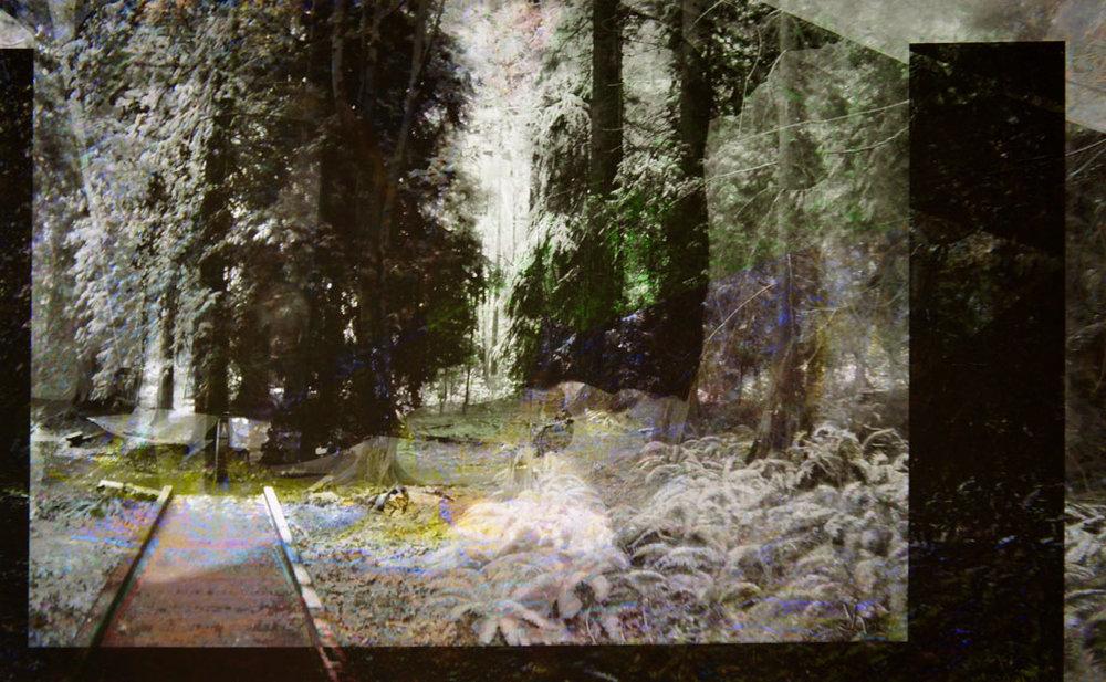 """Sherwood Forest """"Walkway""""  (El bosque de Sherwood """"Pasarela"""") C-Print en poliéster"""
