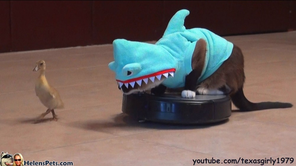 The reason the Internet was Created: A cat in a shark costume on a Roomba chasing a baby duck.